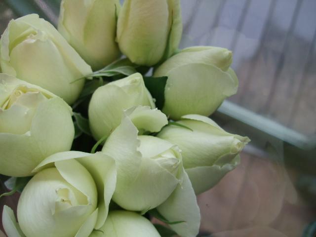 オークリーフ(白い忘れな草の花)_f0049672_14393036.jpg