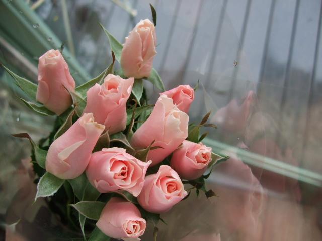 オークリーフ(白い忘れな草の花)_f0049672_14393818.jpg