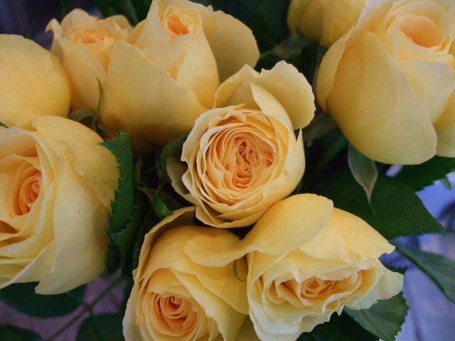 オークリーフ(白い忘れな草の花)_f0049672_1439936.jpg