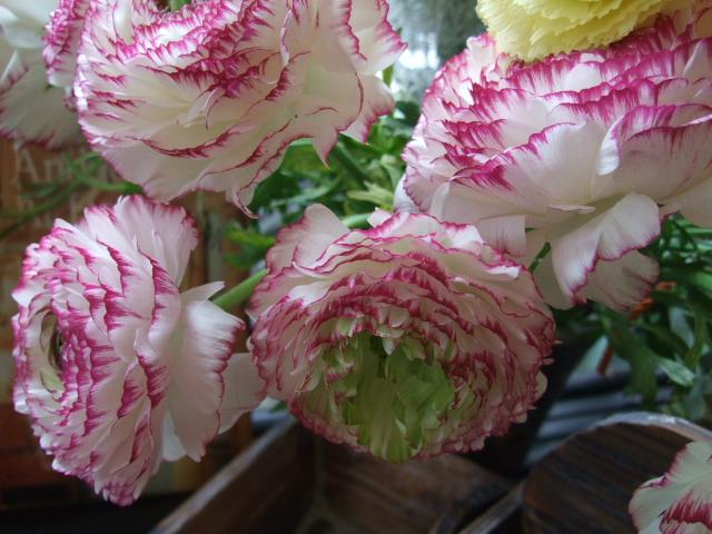 オークリーフ(白い忘れな草の花)_f0049672_14435422.jpg