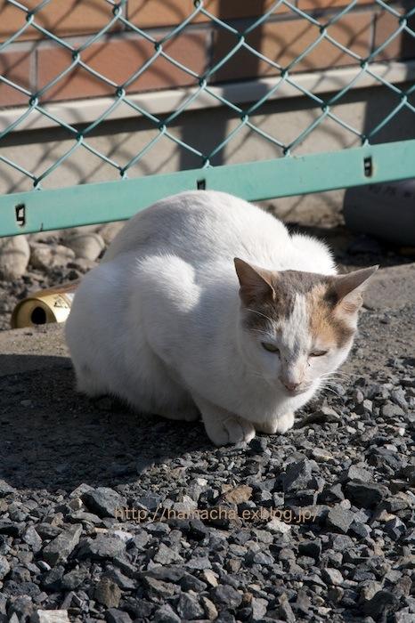 Stray Cat #2_c0158775_19351465.jpg