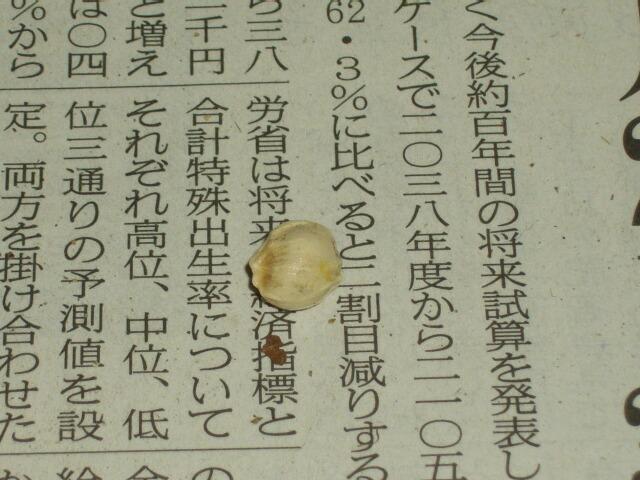 はるみ」という柑橘を食べてみた。 _f0018078_19393487.jpg