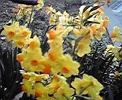南房総は、春?!_b0153591_19511859.jpg