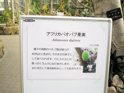バオバブ果実の説明