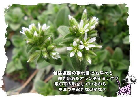f0137096_1147397.jpg
