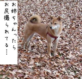f0068501_184463.jpg