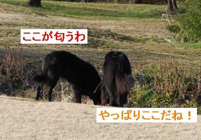 f0109202_21434977.jpg