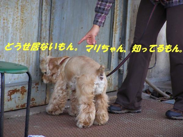 b0067012_002456.jpg