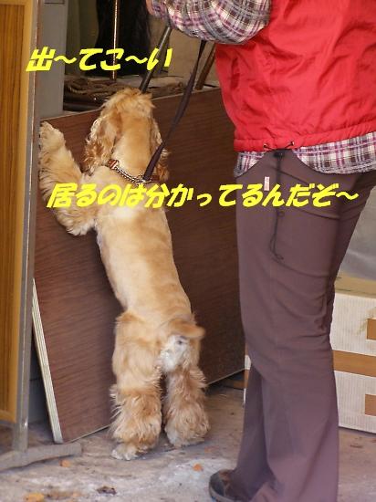 b0067012_004357.jpg