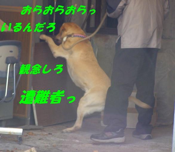 b0067012_01130.jpg