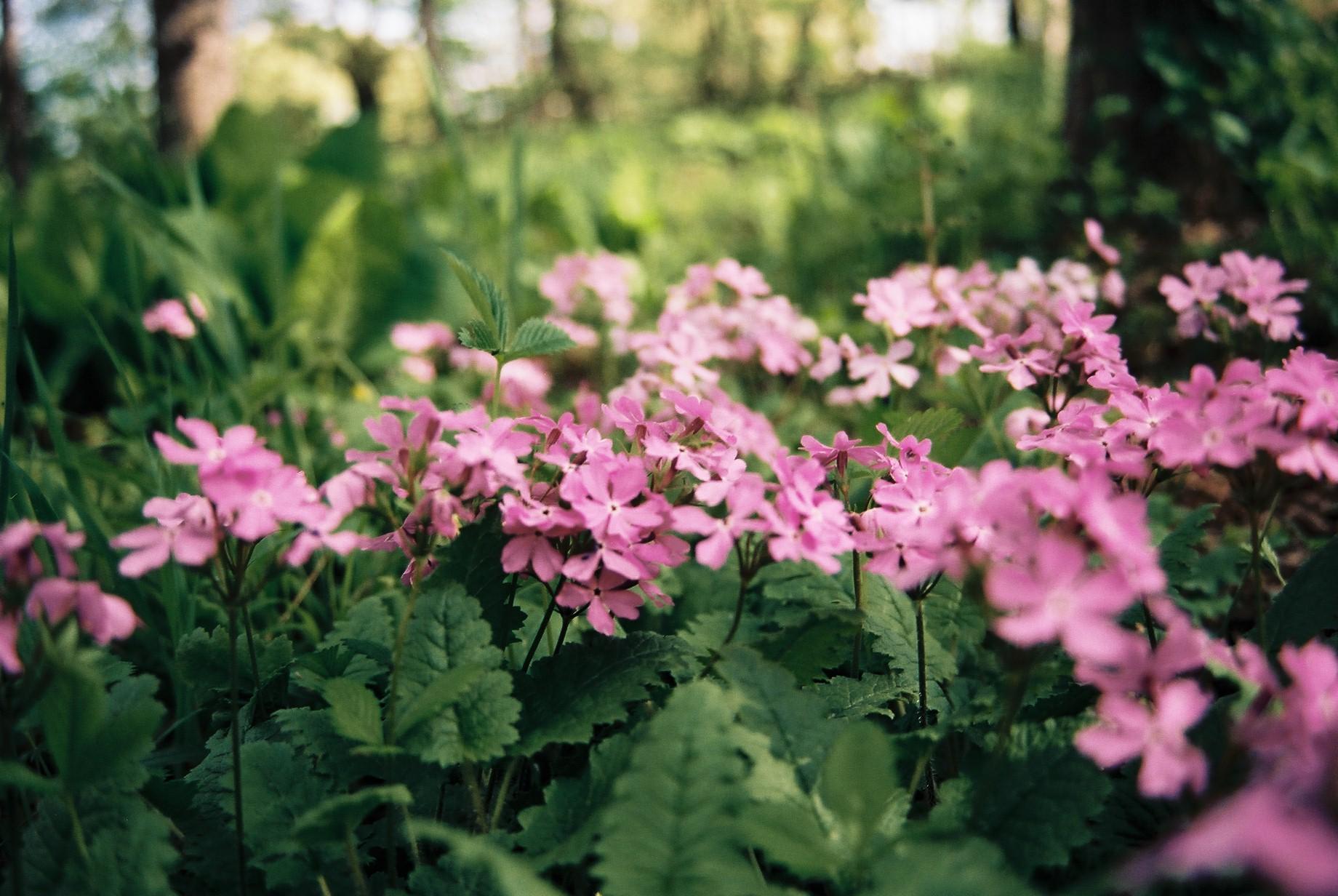 寒い日に…花11_a0103650_1123014.jpg