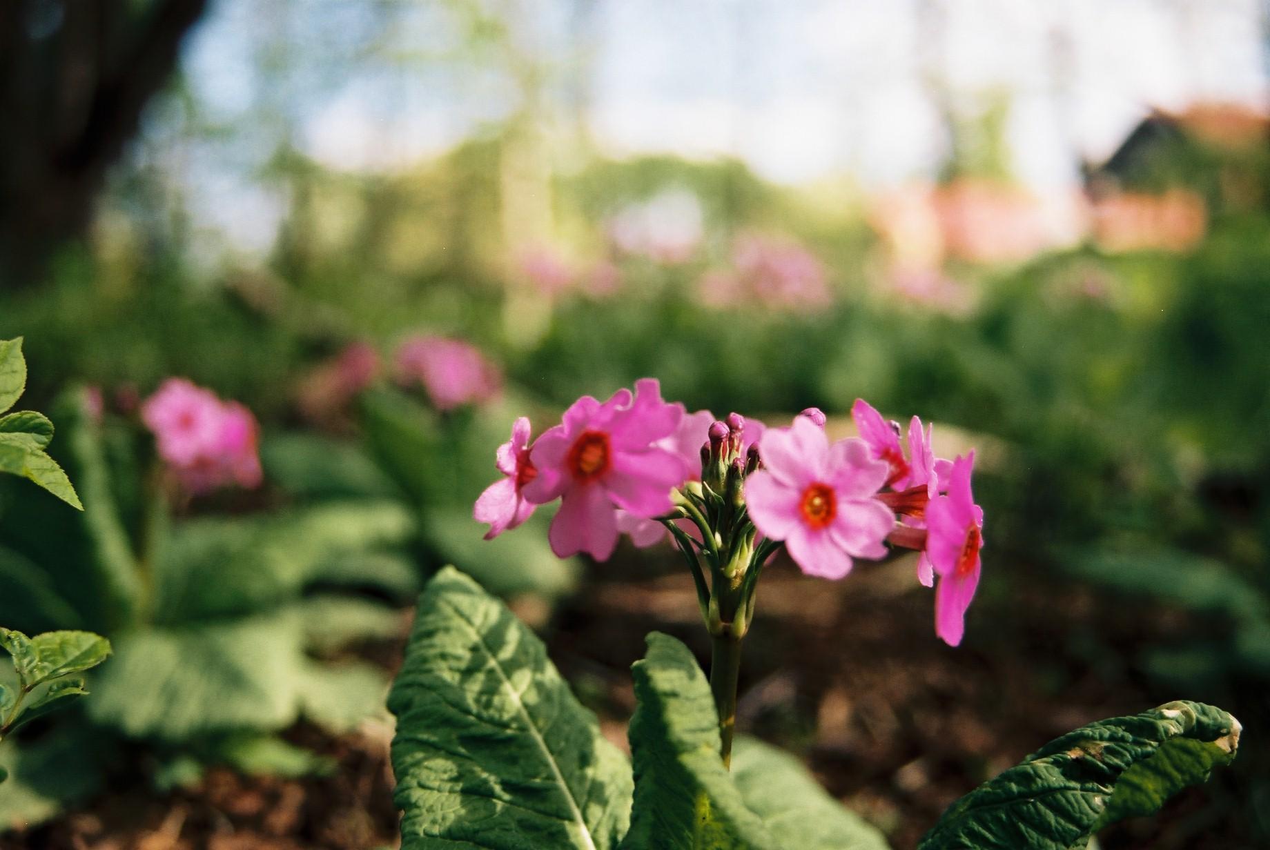 寒い日に…花11_a0103650_1125935.jpg