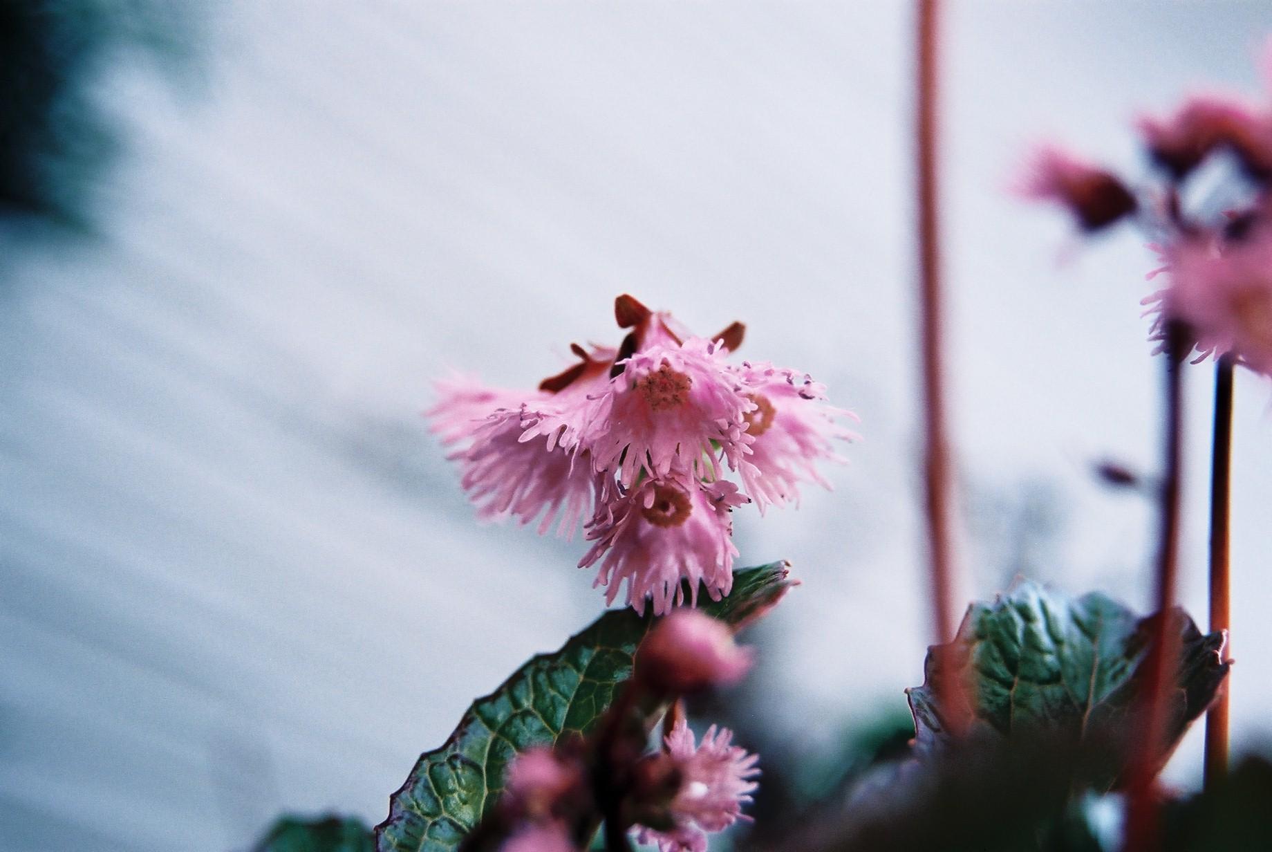 寒い日に…花11_a0103650_1142979.jpg