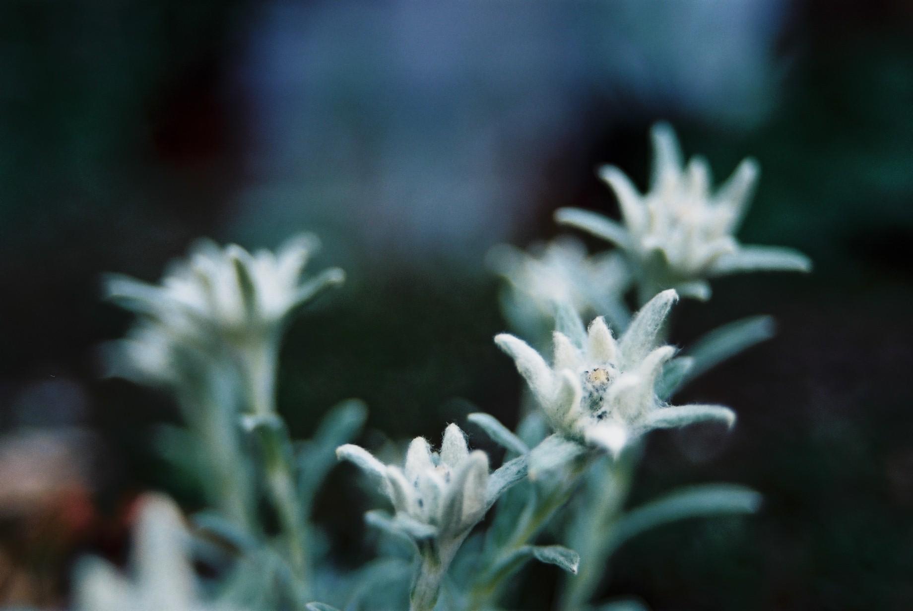 寒い日に…花11_a0103650_1143738.jpg