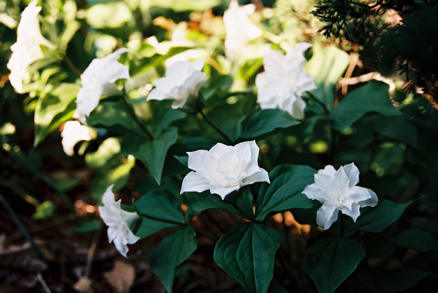 寒い日に…花11_a0103650_1152918.jpg