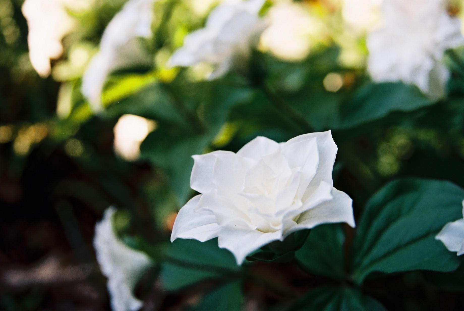 寒い日に…花11_a0103650_1153842.jpg