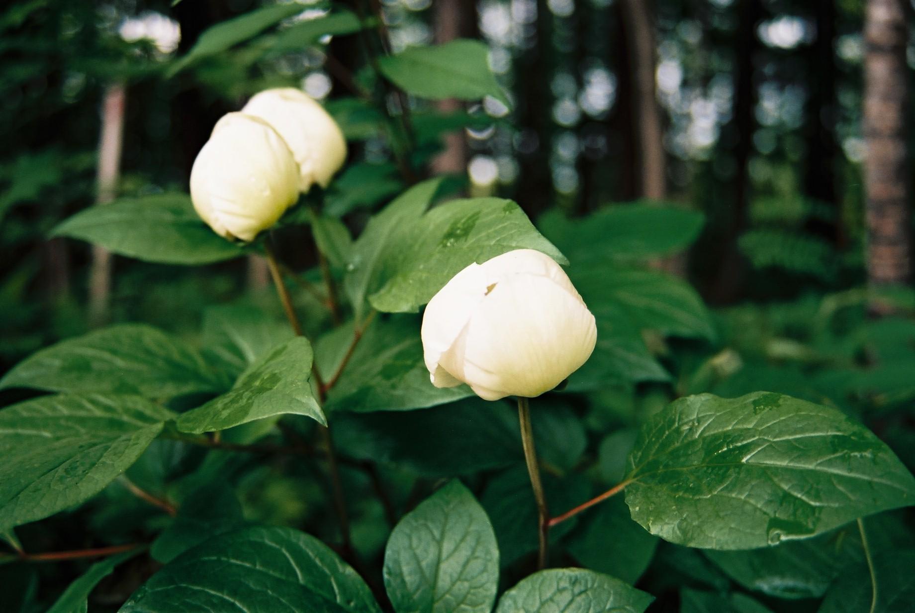 寒い日に…花11_a0103650_1155581.jpg