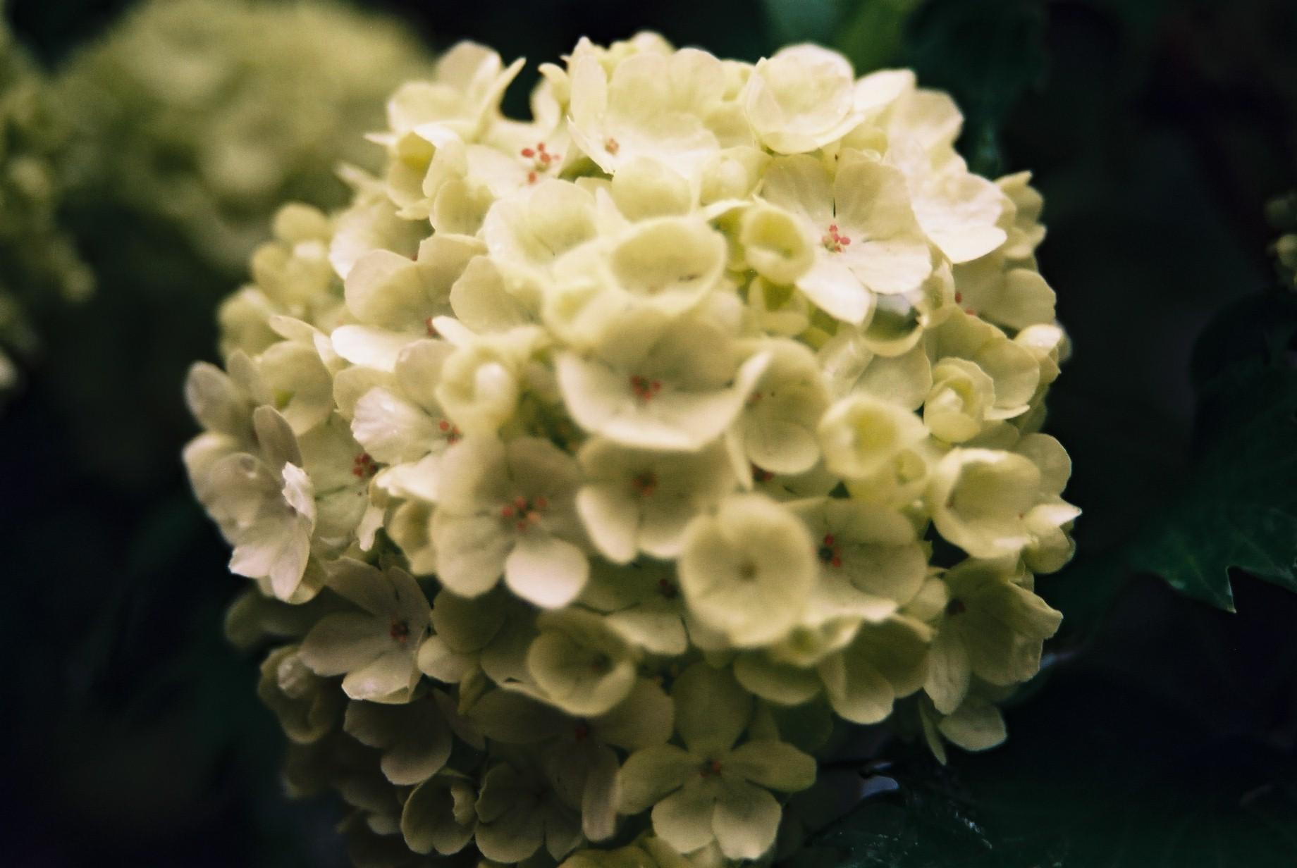 寒い日に…花11_a0103650_1163167.jpg