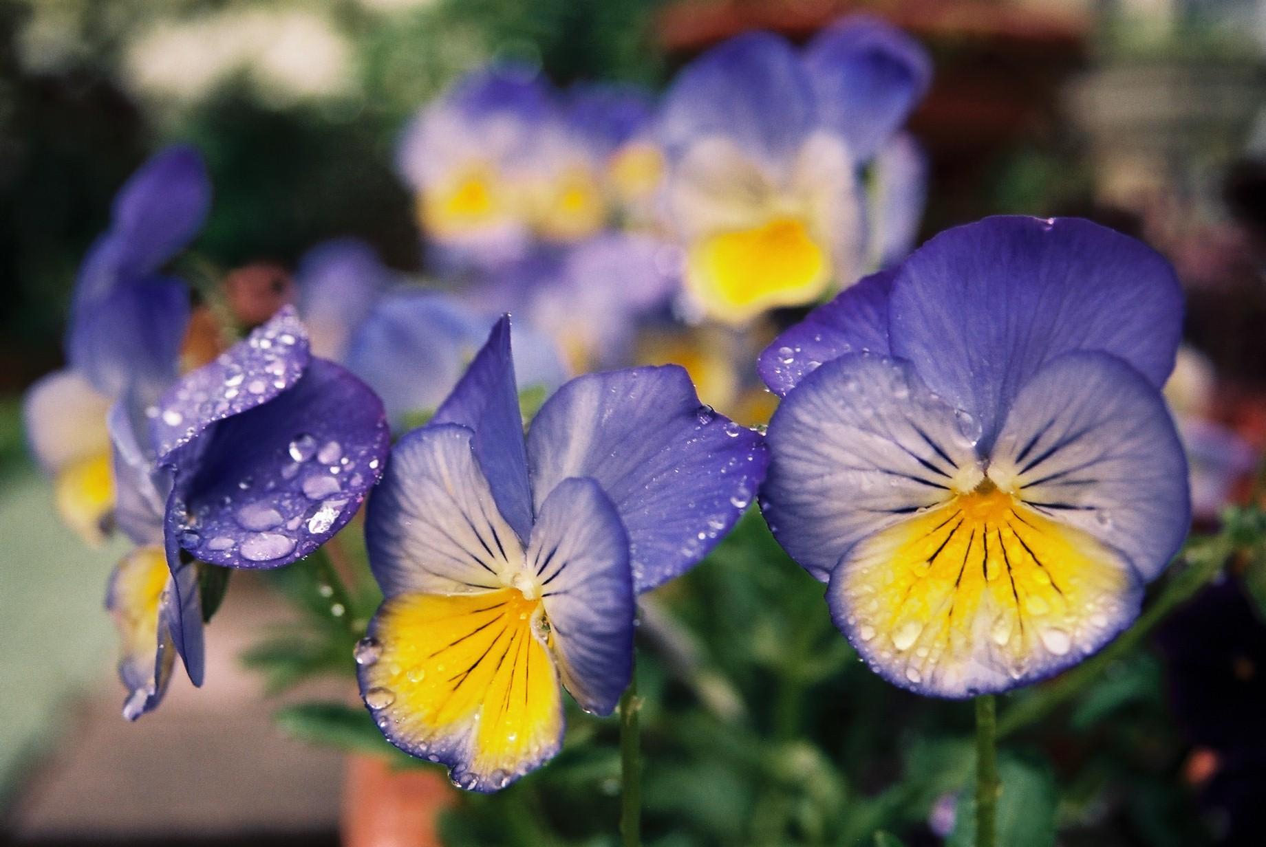 寒い日に…花11_a0103650_1163913.jpg