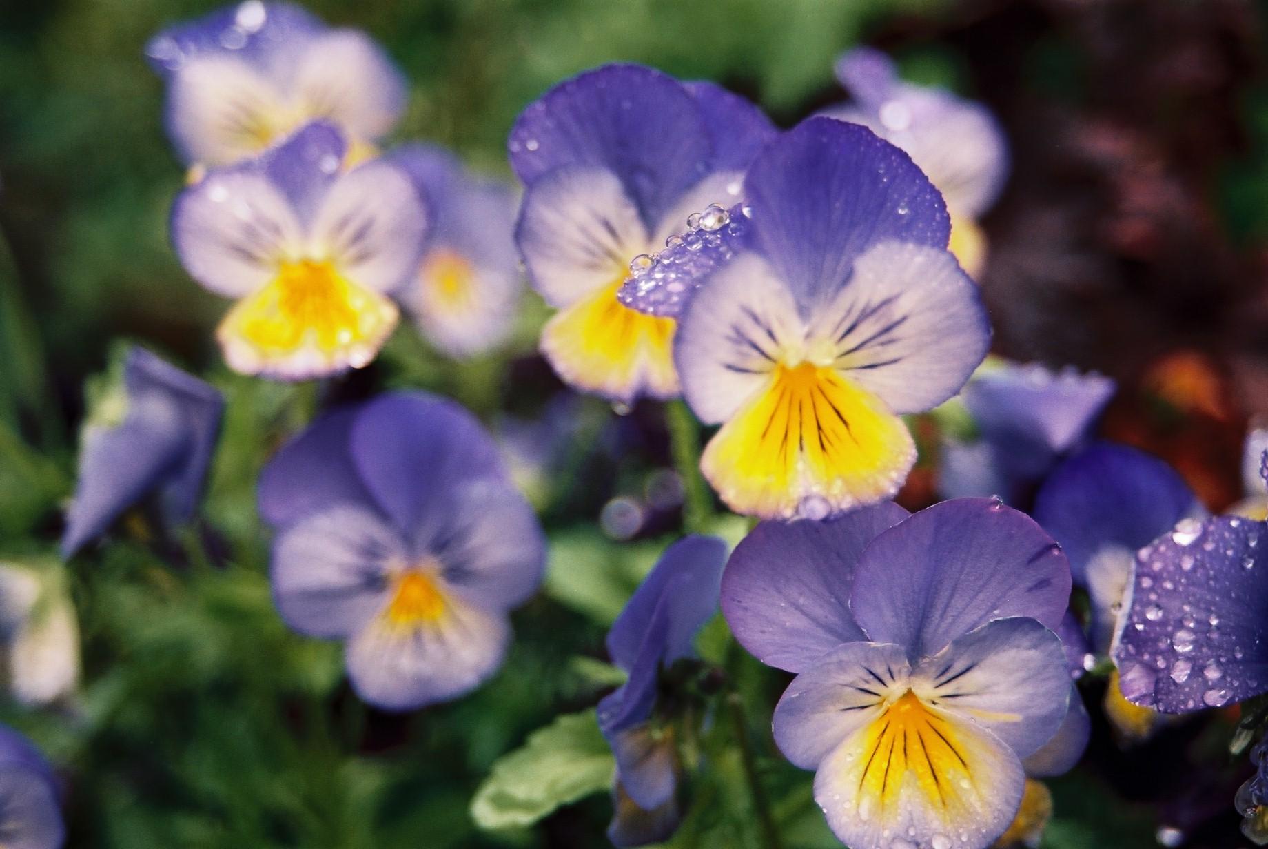 寒い日に…花11_a0103650_1164950.jpg