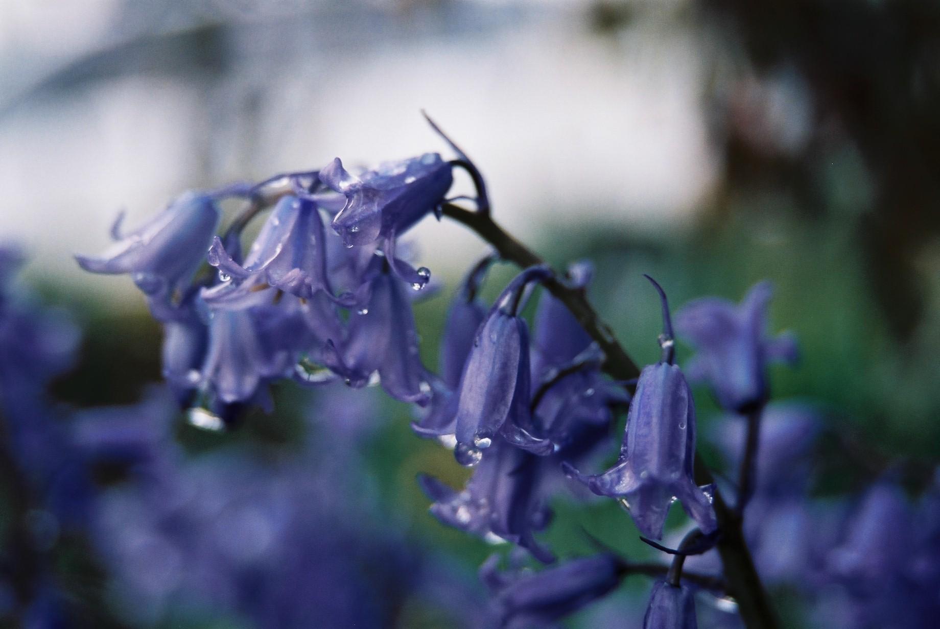 寒い日に…花11_a0103650_1165874.jpg