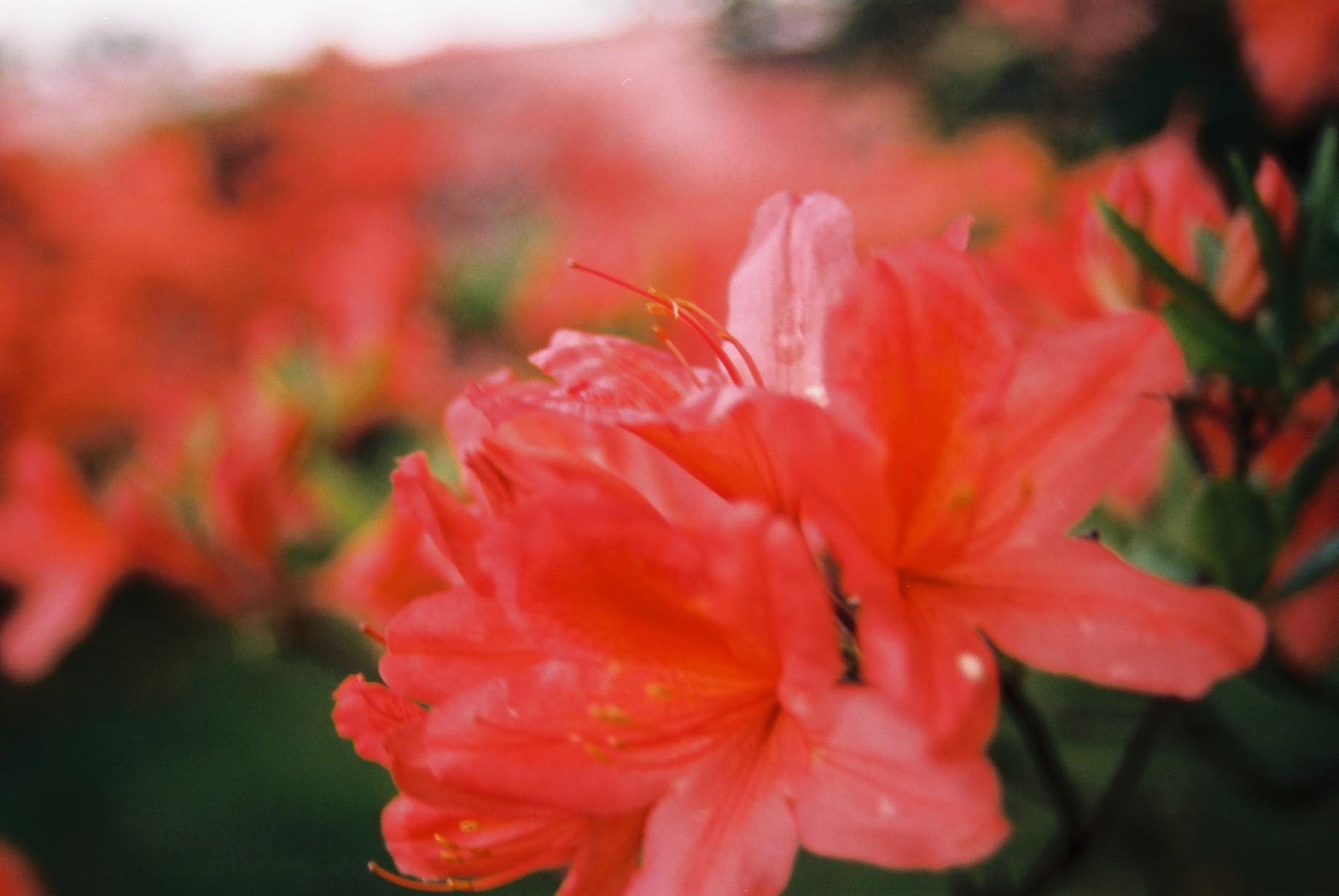 寒い日に…花11_a0103650_1173720.jpg