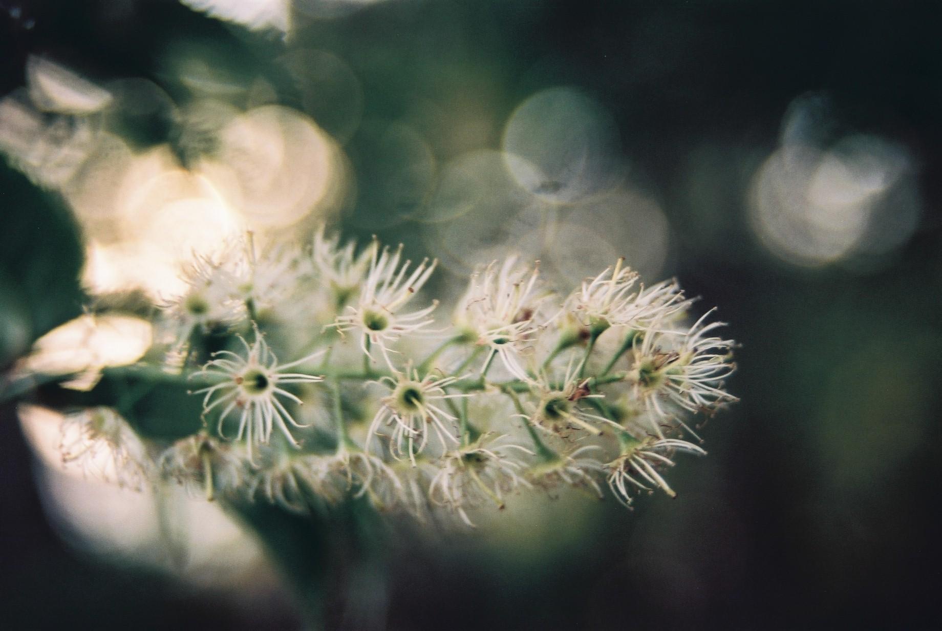 寒い日に…花11_a0103650_1183423.jpg