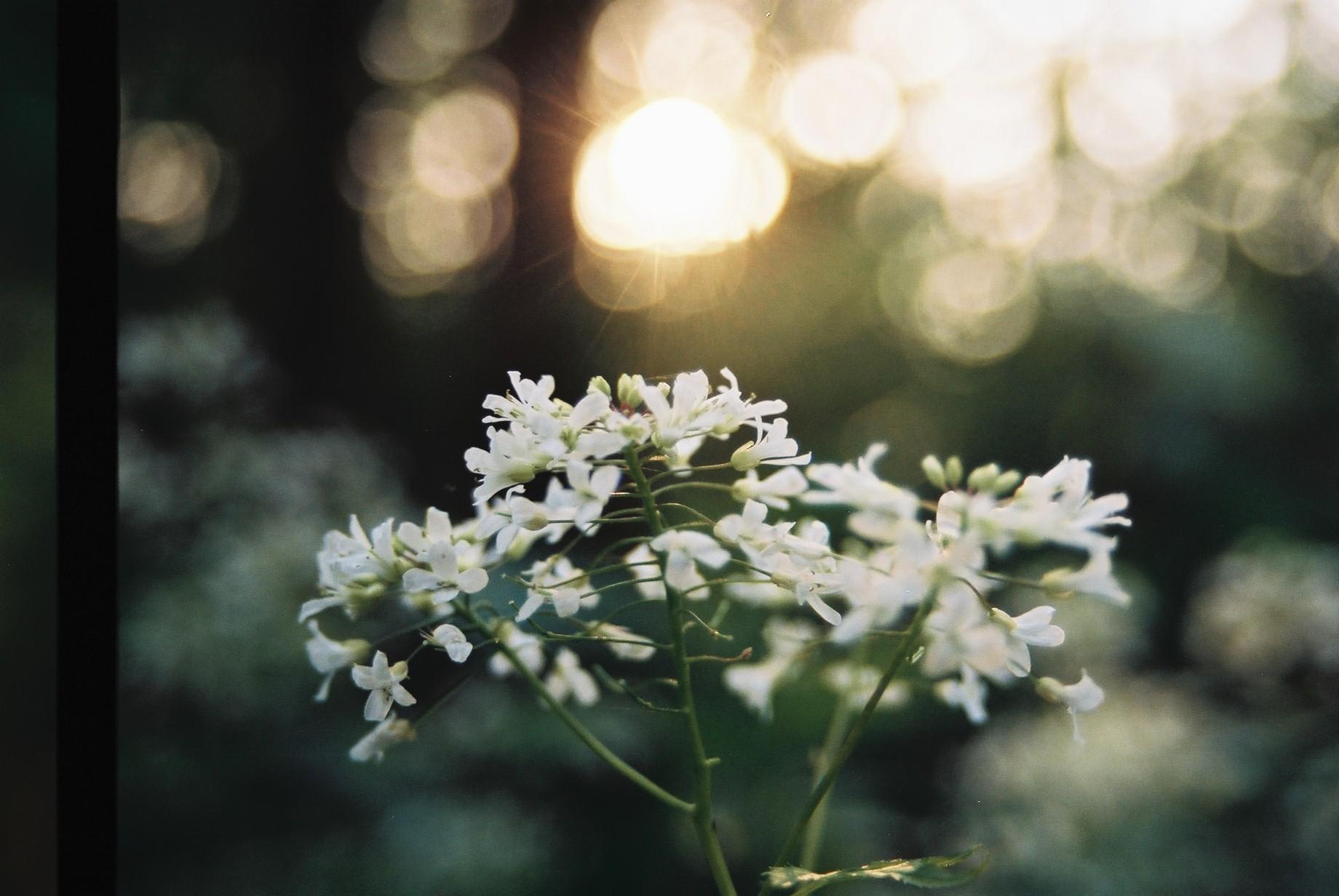 寒い日に…花11_a0103650_1184257.jpg