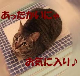 b0118850_21224855.jpg