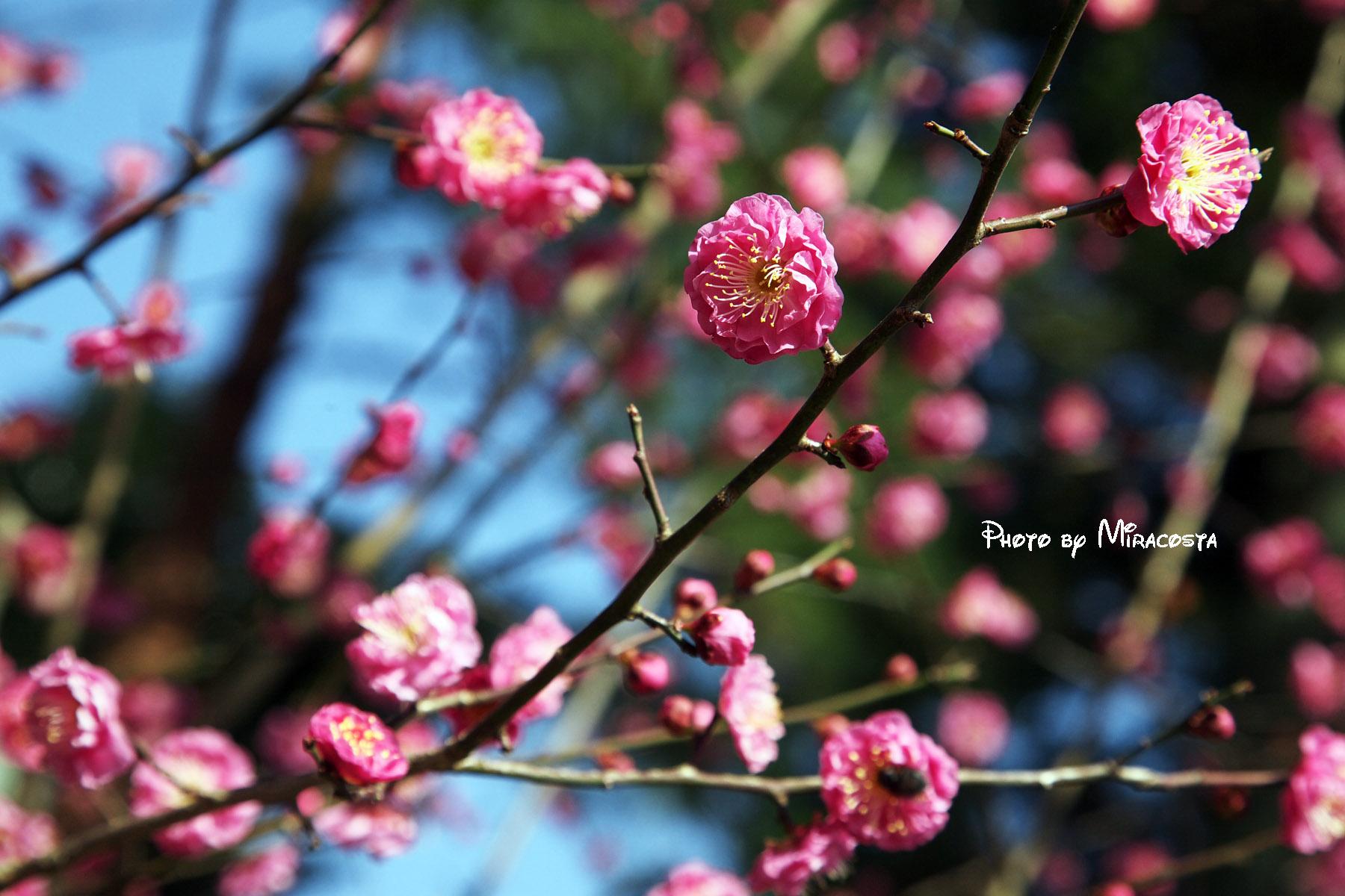 桜はまだか・・_e0140159_2291471.jpg