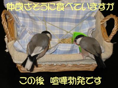 b0158061_20233081.jpg