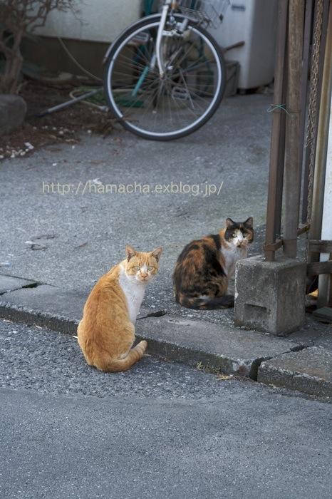 Stray Cat #3_c0158775_20532523.jpg