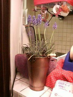 この花に助けられました。_a0075684_2292259.jpg