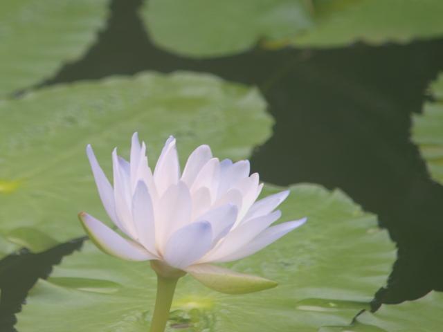 咲くやこの花館 その1_c0187587_1936953.jpg
