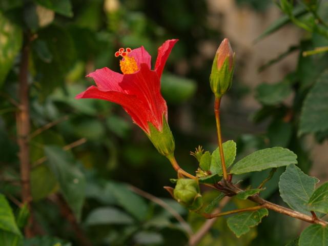 咲くやこの花館 その1_c0187587_19443421.jpg