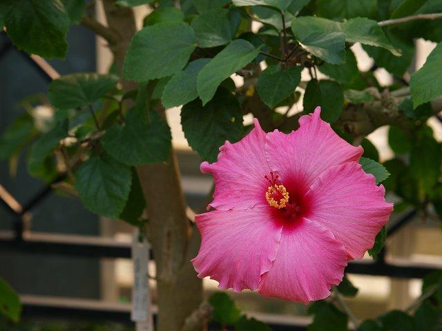 咲くやこの花館 その1_c0187587_19445479.jpg