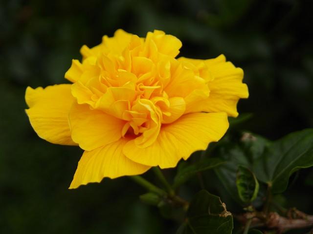 咲くやこの花館 その2_c0187587_23301489.jpg