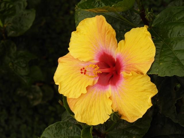 咲くやこの花館 その2_c0187587_2332764.jpg