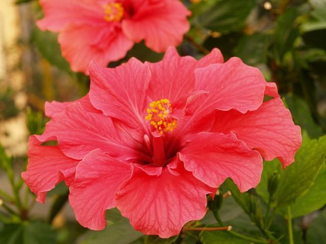 咲くやこの花館 その2_c0187587_23344241.jpg