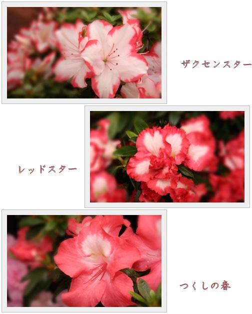 f0146493_22562721.jpg