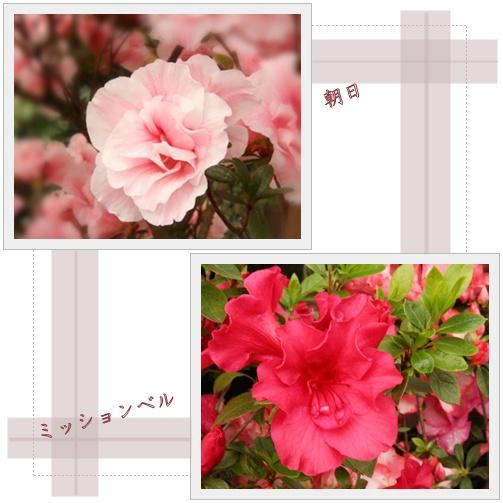 f0146493_22564233.jpg