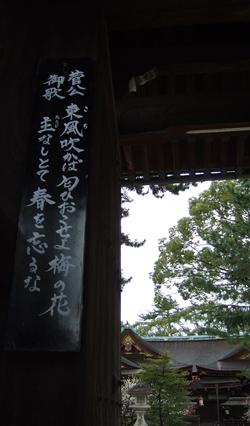 梅さく嵐電 天神さんの花番牛 只今七分咲き_c0069903_5402256.jpg