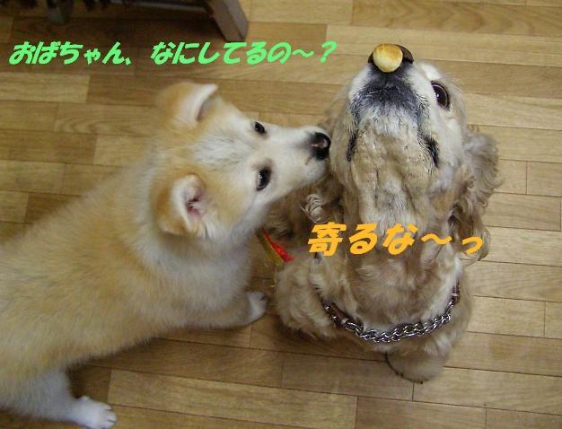 b0067012_0574395.jpg