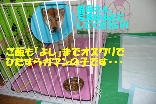 f0121712_17282166.jpg