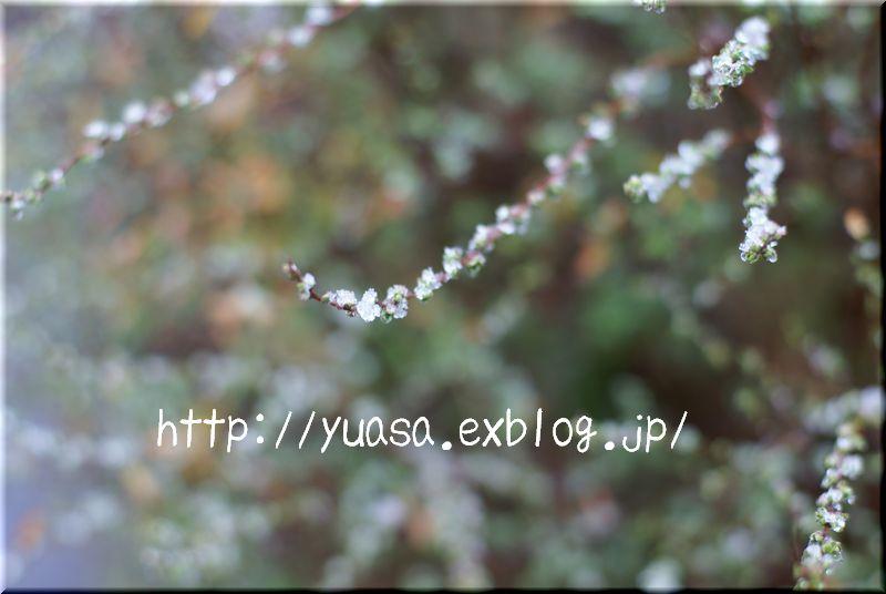 f0156117_19143950.jpg