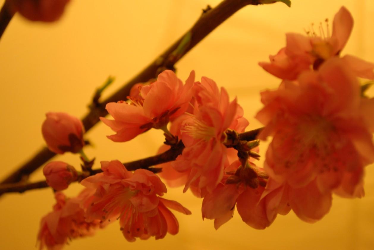 桃と禅の関係♪_c0156749_2325372.jpg