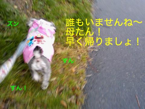 c0177261_10561917.jpg