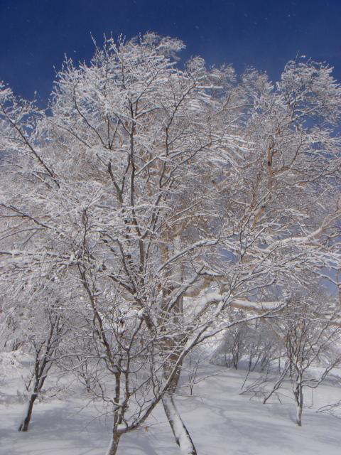 青と白の光_c0006767_815314.jpg
