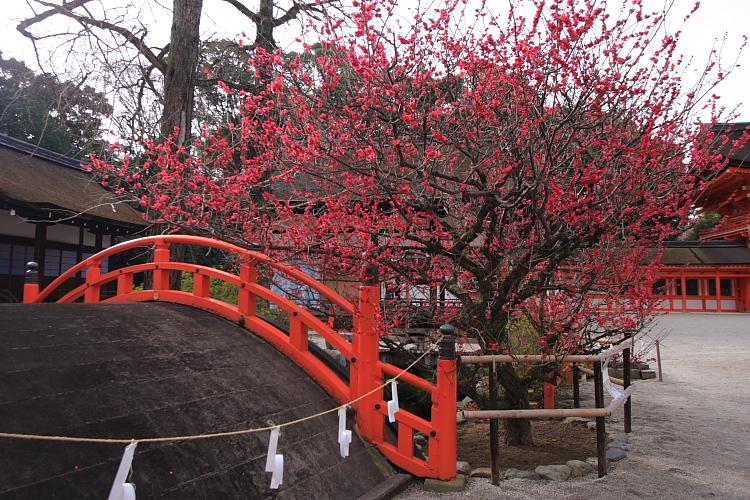 下鴨神社_e0051888_1251083.jpg