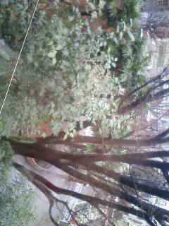 今日は雪です_c0163890_11245349.jpg